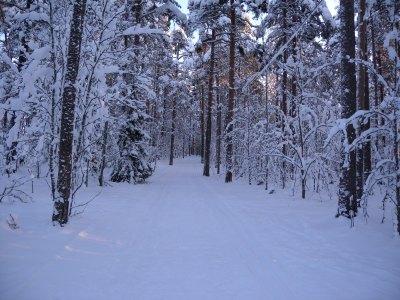 Latu metsässä