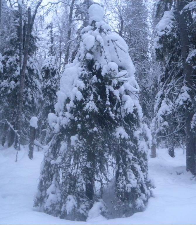 Joulukuusi lumikynttilöin