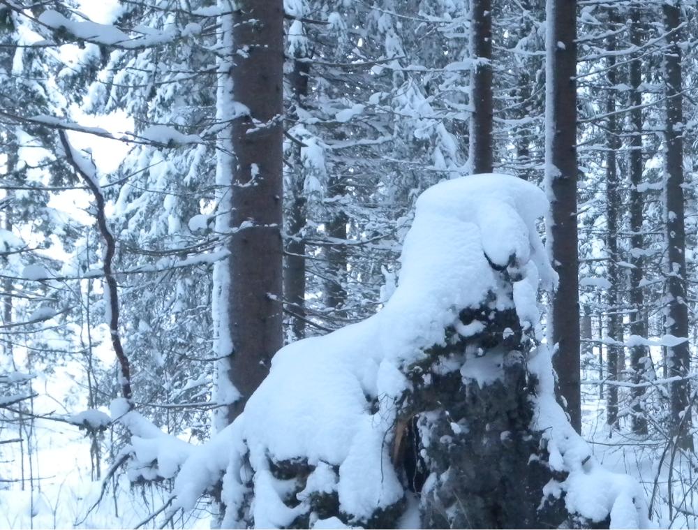 Valkoturkkinen hauvelihan se siinä. Vai onko se jääkarhu?