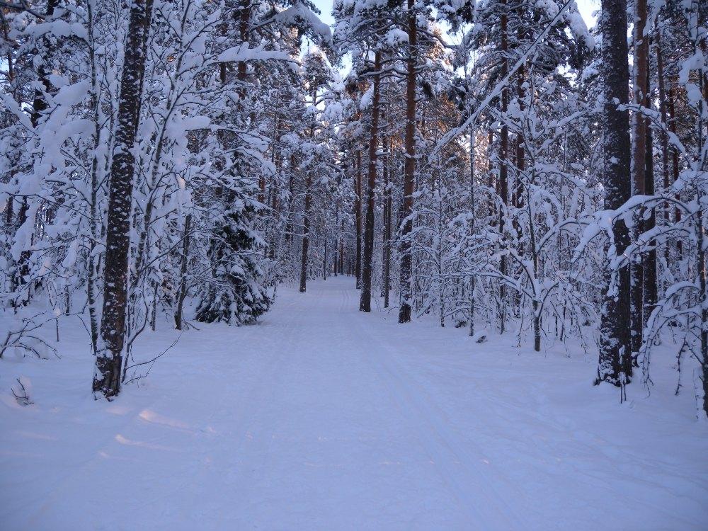 Kaksi latua Pyynikin metsässä Tampereella.