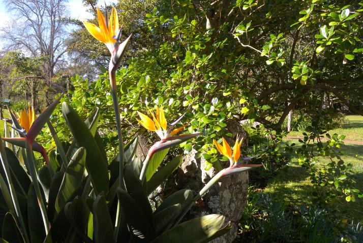 Erkoiset kolibrikukat koristavat puistoja ja katukuvaa.