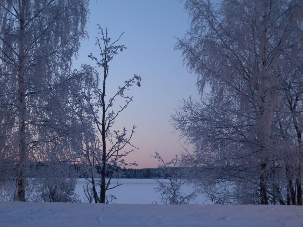 Lumiset puut rannassa