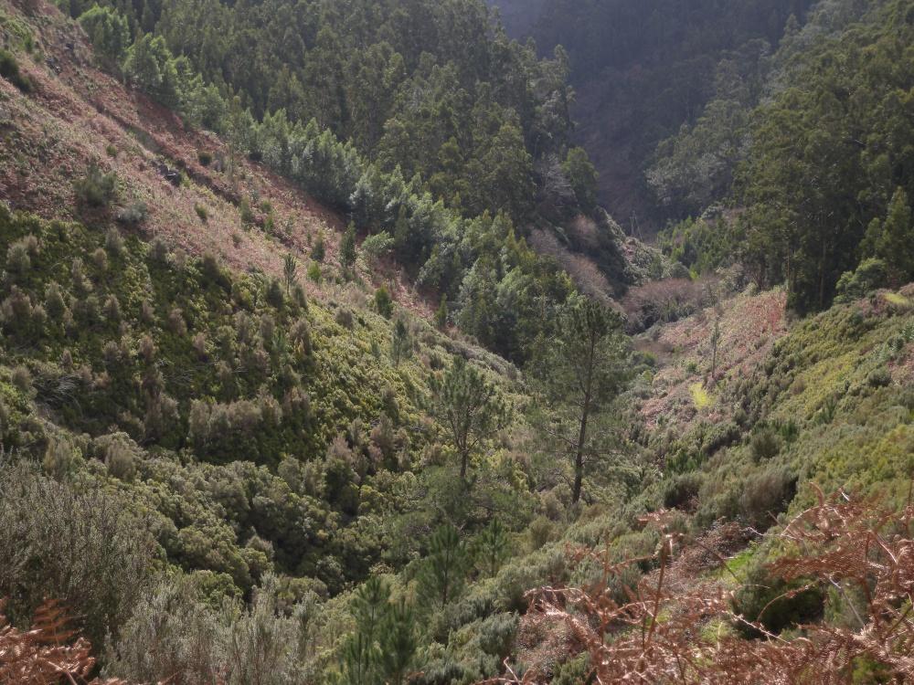 Ihailtiin laaksoja, rotkoja, vuoria ja kukkuloita.