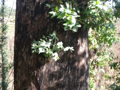 Palaneesta rungosta työntyy vihreitä oksia.