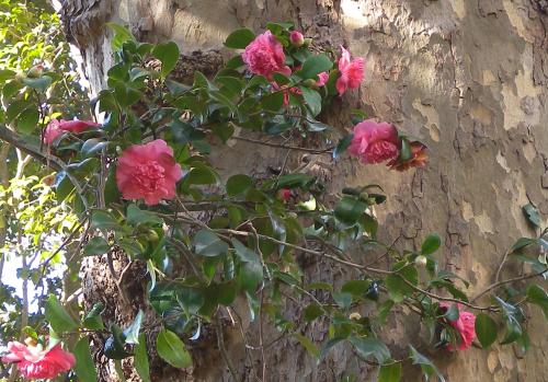 Ruusuja rungolla.
