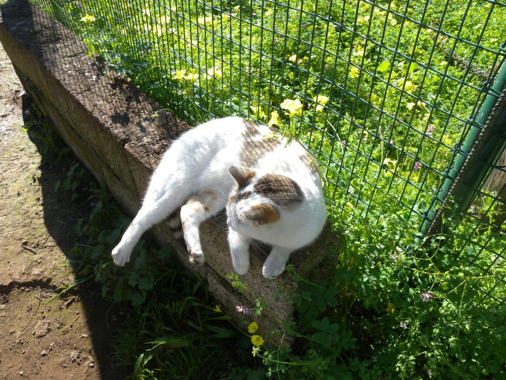 Shena-kissan isäntä kuvaili lemmikkiään ystävälliseksi.