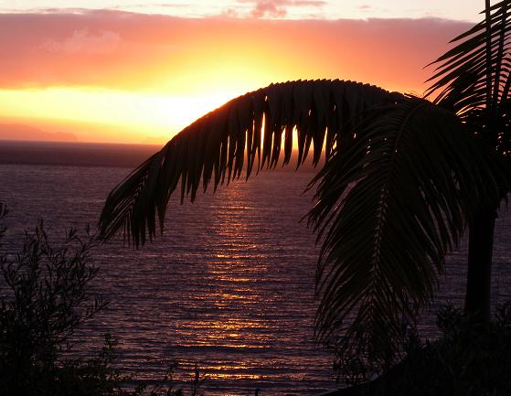 Violetti meri ja palmu.