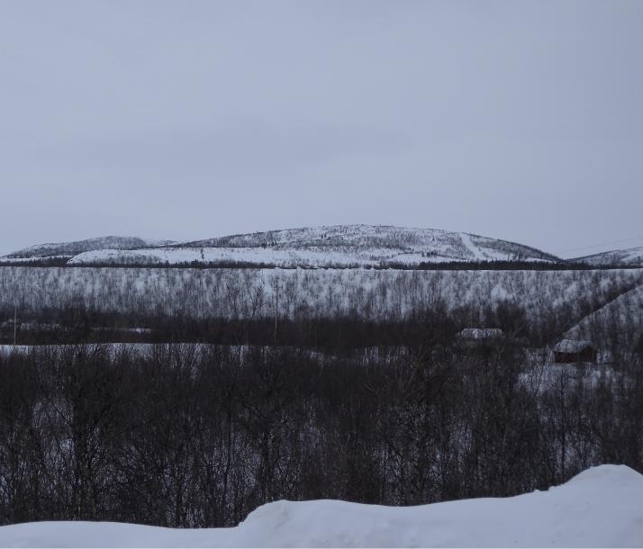 Lumi tummat puut vaara ja taivas