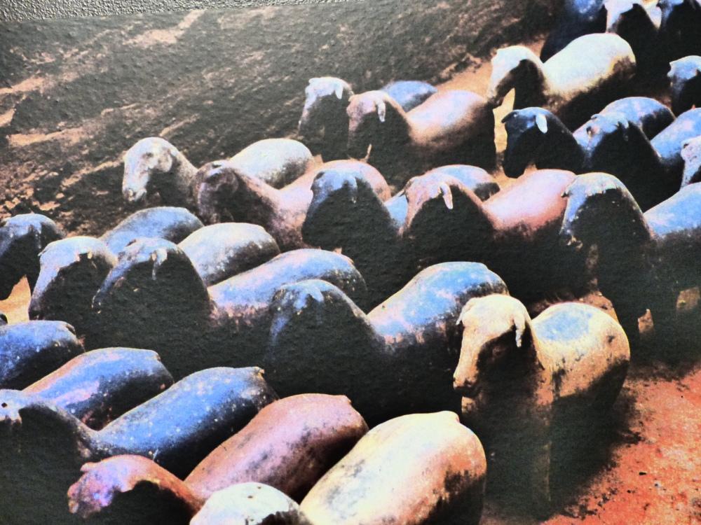 Keisarin hautakylässä oli myös lammasfarmi.