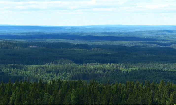 Metsän sävyjä.