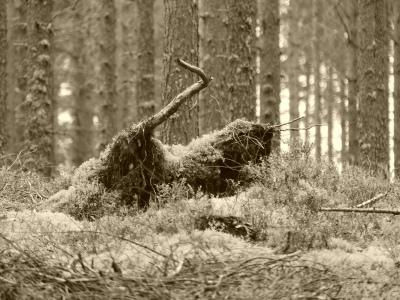 Katti metsästää Kultajärven metskössä.