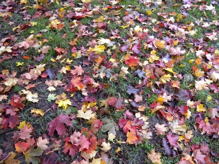 Lehdet.