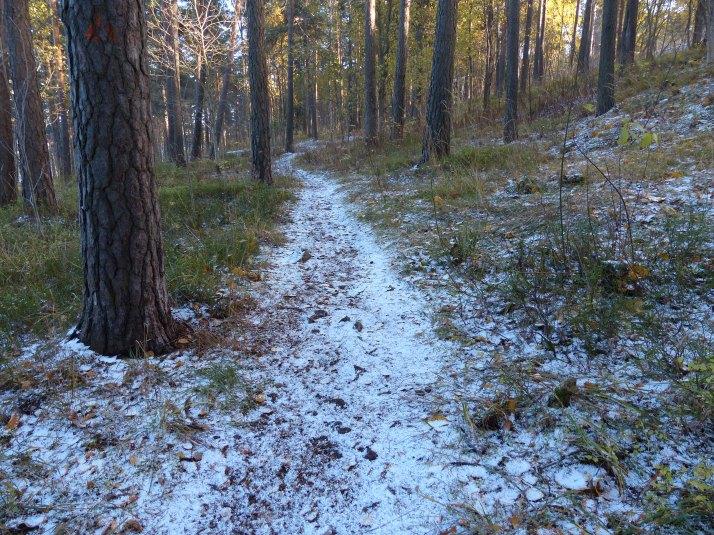 Metsäpolku luminen  2013-10-19 15.30.11