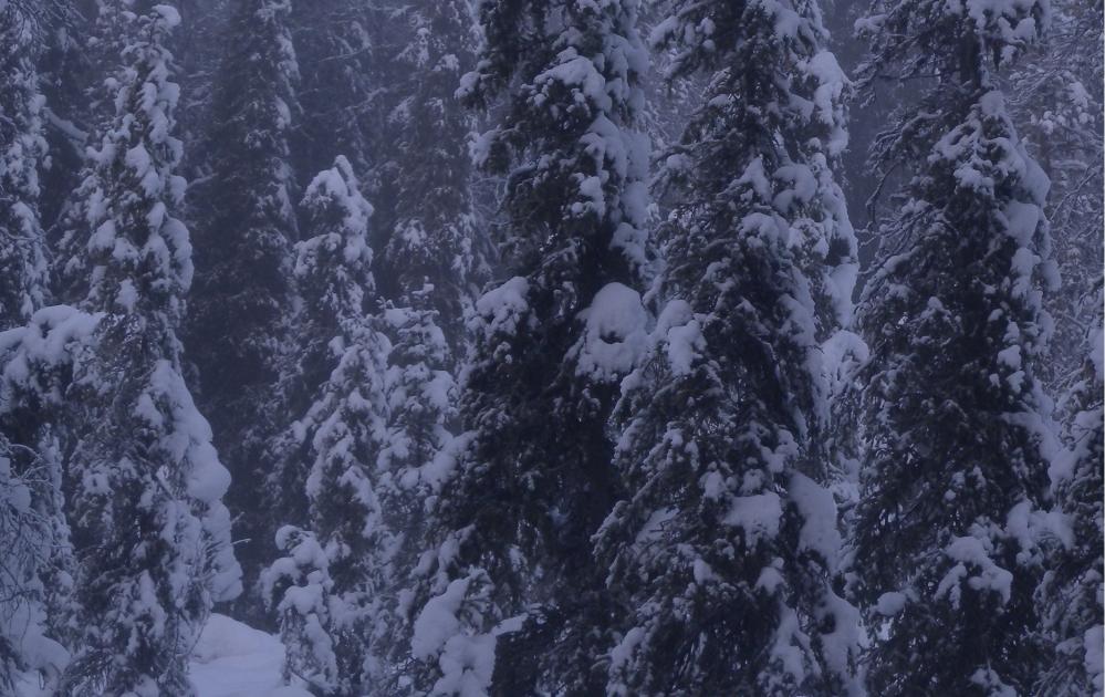 Metsässä lunta