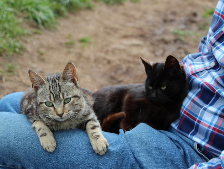 Kissat sylissä.