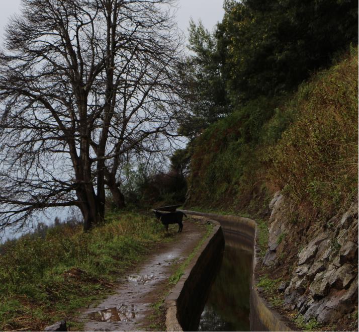 Sateen kastelema polku levadan vieressä.