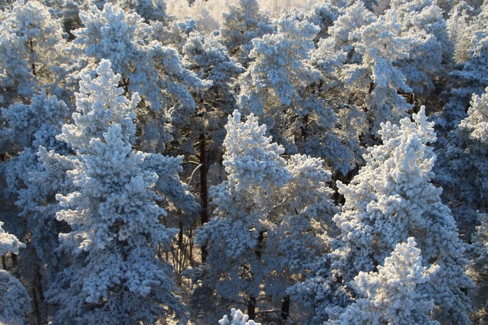 Talvi metsässä.
