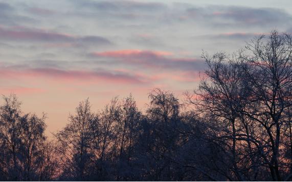 Vaaleanpunainen taivas pusikon takana.