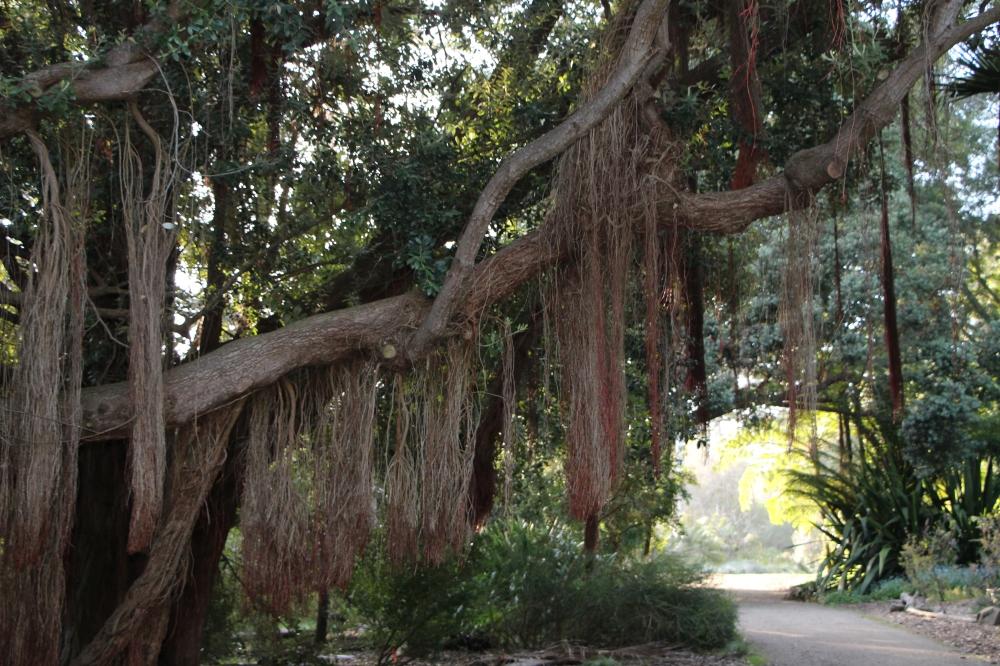 Botanical Garden SF 1