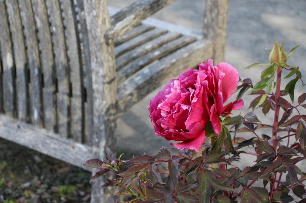 Botanical Garden SF 7