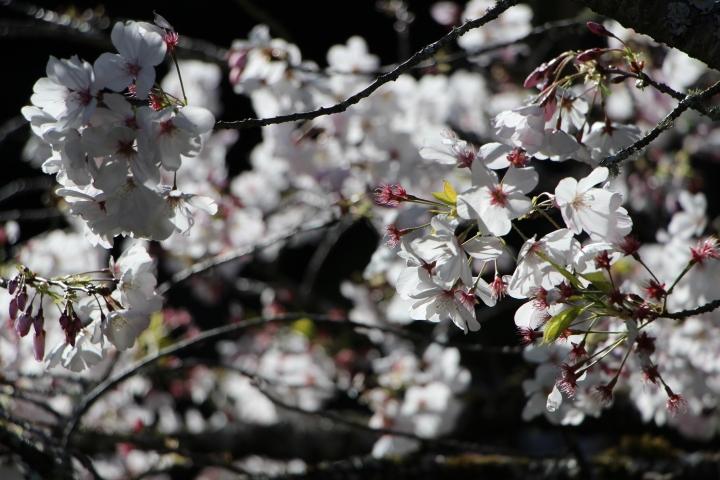 Japanilainen puutarha 3
