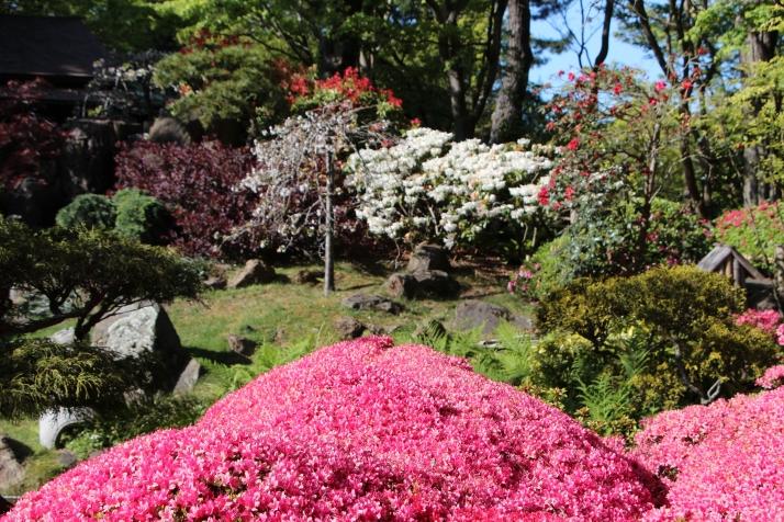 Japanilainen puutarha 8
