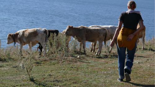 Nainen hakee karjaa kotiin Marakol-järven rannalta.