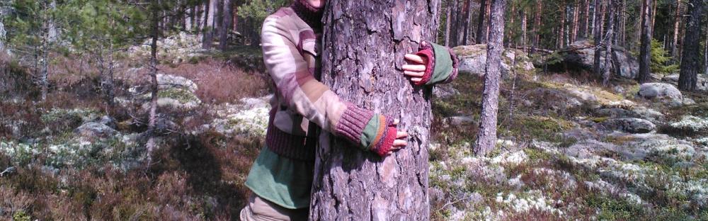 Puun halaaja