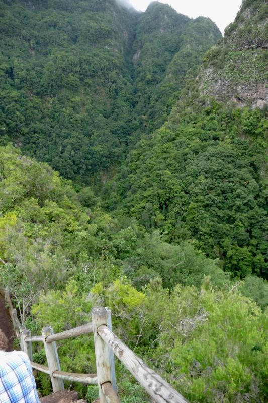 P rappusilla La Palma