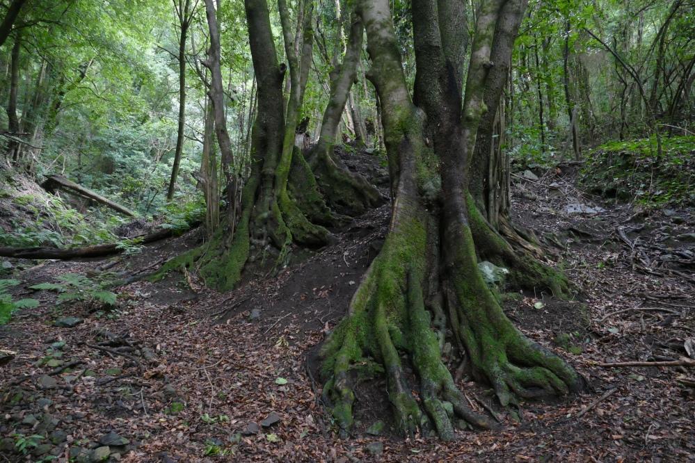 Satumaiset juuret La Palma