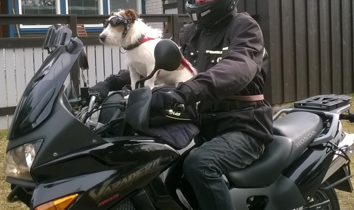 Koira ja moottoripyörä
