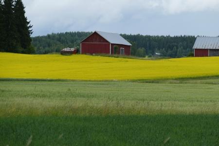 2015-07-19  Punainen lato, sato keltaista ja vihreää