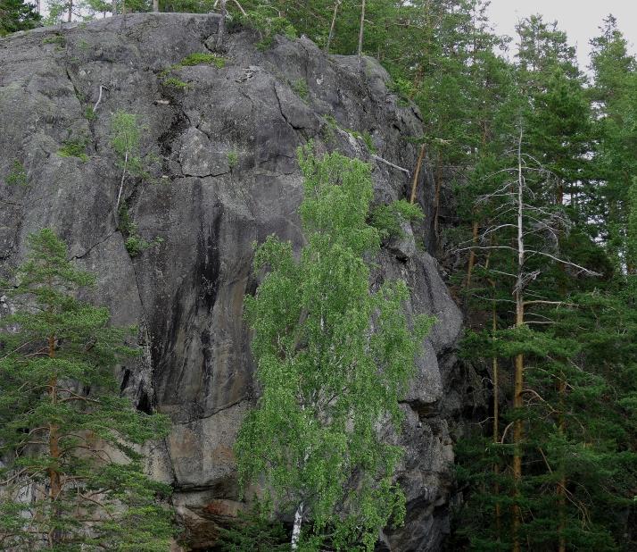 Kalliossa näkyvät kasvot koivun takana oikealla. Ehkäpä juuri kasvojen vuoksi kalliomaalaukset on tehtykin.