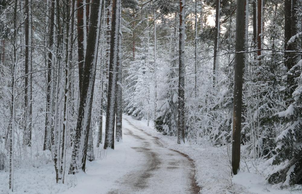 Talvitie Pyynikki