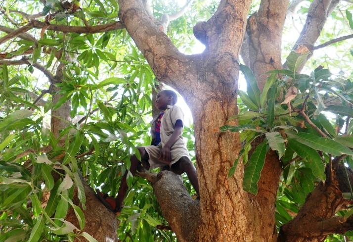 Koulusssa Poika puussa.JPG