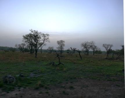 Pen maa ja puita