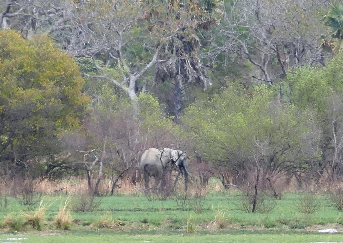 Pen12 elefantti astelee