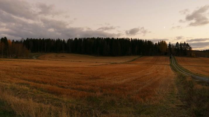 Lokakuinen peltoaukea Vesilahden Narvassa.