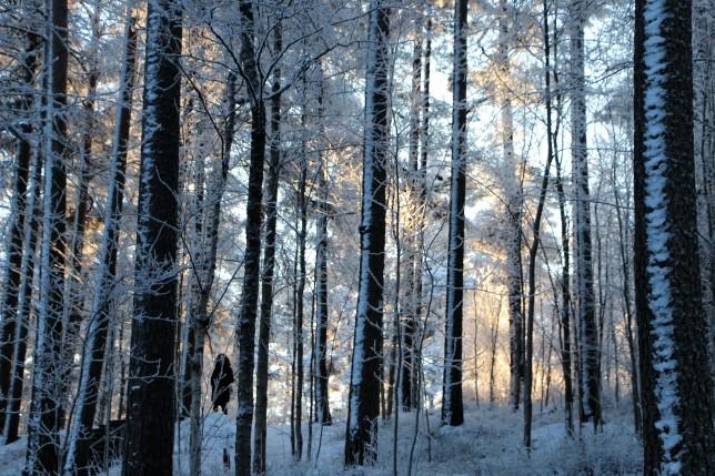 metsan-puut-valossa