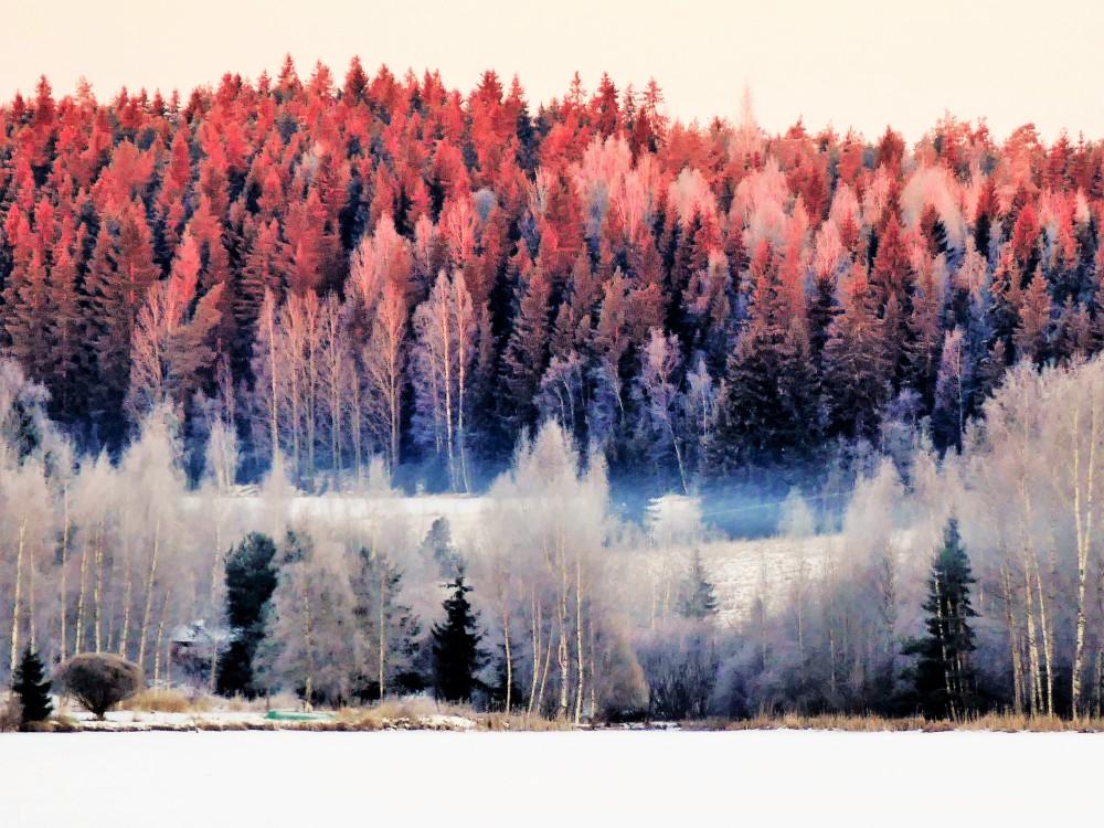 narva-2017-helmikuu-metsan-reuna