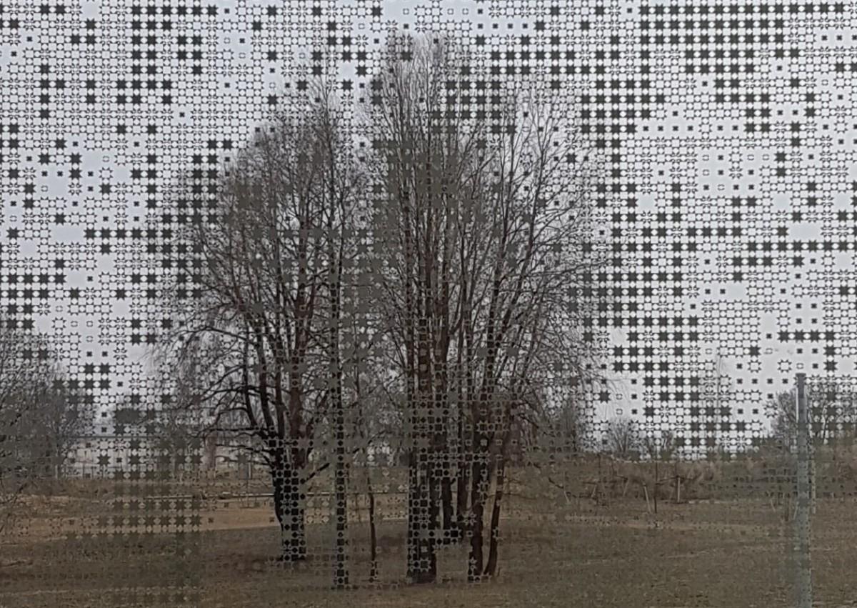 Pitsipuu harmaa