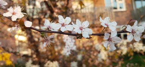 kukat-vaakatasossa.jpg
